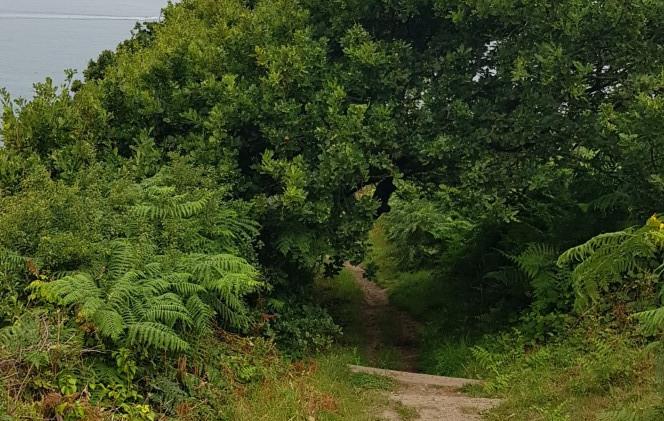 Trinity Trail (17).jpg