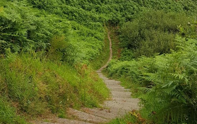 Trinity Trail (03).jpg