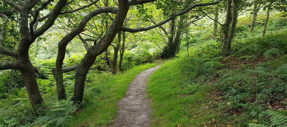 Trinity Trail (07).jpg