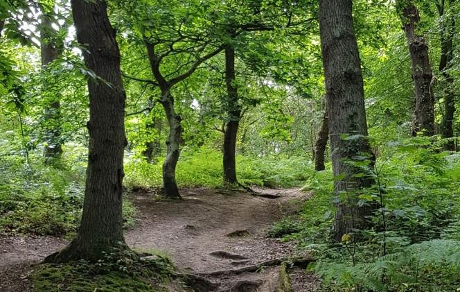 Trinity Trail (50).jpg