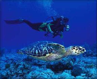 19_underwater.jpg
