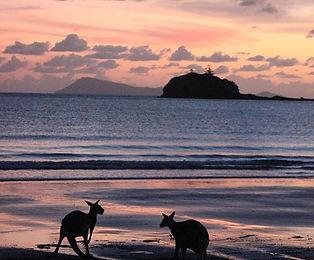 kangaroos; sunrise