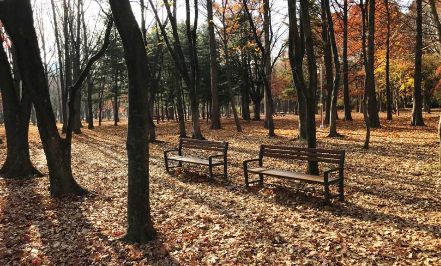 주변 양재시민의 숲 #4