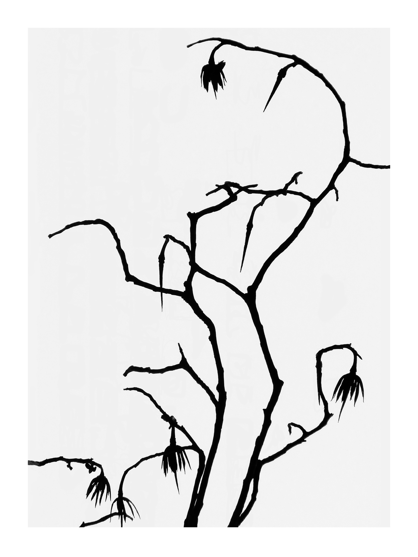 Tulip Tree 5 Print