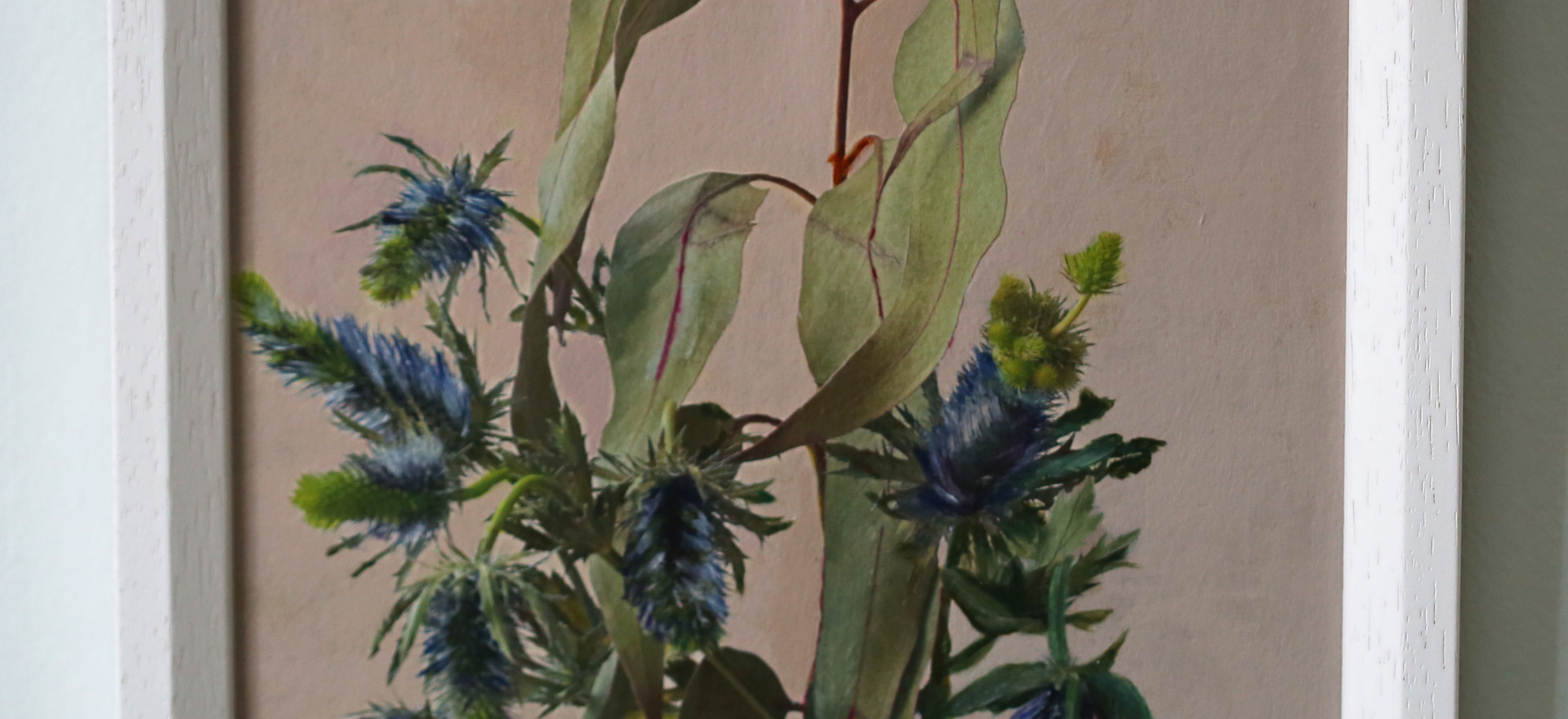 Eucalyptus and Eryngium