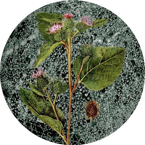 Floral Sphere 3