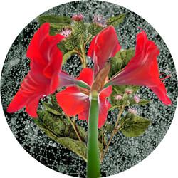 Floral Sphere 6