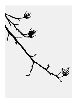 Tulip Tree 3 Print