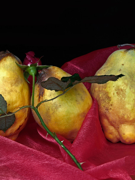 The three Quinces, Reclining