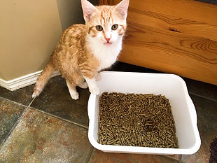 EZPelletz Cat Litter