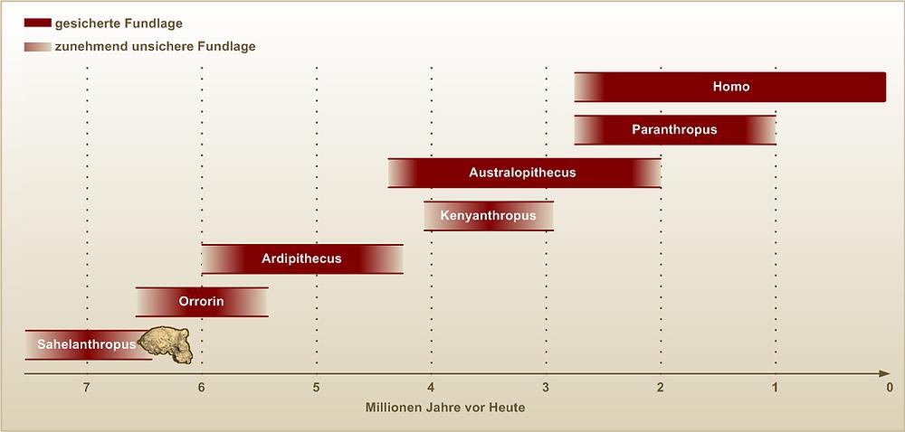 diese 7 mio Jahre der menschlichen Entwicklung, Wikimedia