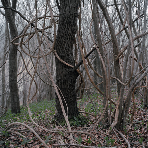 H_forestiers (1 sur 13).jpg