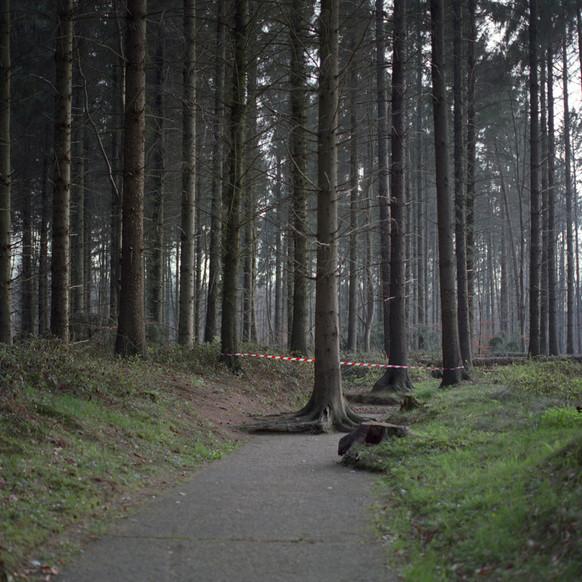 H_forestiers (11 sur 13).jpg