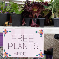 Creative West End Plant Stall