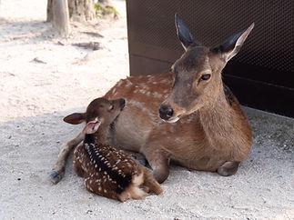 Deer in sand roxane-mace-766466-unsplash