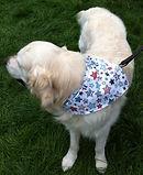 Multi Star Design Dog Bandana, Dog Bandanas UK, Dog Clothing, Dog Birthday Gifts