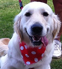 Red Spot Dog Bandana, idea birthday gift, dog clothing uk, dog bandanas