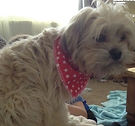 Red Star Design Dog Bandana, Dog Bandanas UK, Dog Clothing, Dog Birthday Gifts