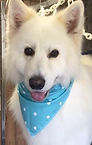 Teal Polka Dot Dog Bandana, Dog Bandanas, Dogs UK, Dog Clothing