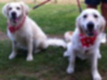 Dog Safety, dog trade bandanas, neck scarves for dogs UK