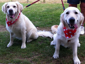 Dog Safety, dog trade bandanas, neck scarves for dogs UK