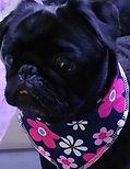 Pink Style Dog Bandana, Dog Clothing, Floral Dog Bandana, Pretty UK