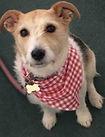 Gingham Check Dog Bandana, Red, Dog Gift UK, Dog Clothing