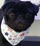 Multi Star Cotton Design Dog Bandana, Dog Bandanas UK, Dog Clothing, Dog Birthday Gifts