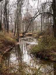 Forest water view