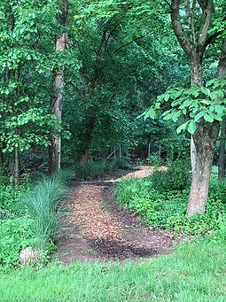 A winding path through the woods