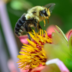 Buzz in the garden