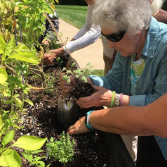 Seniors gardening in raised bed