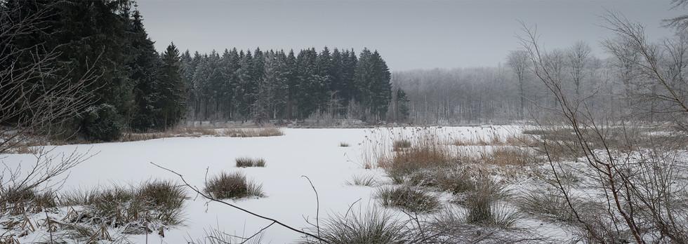Skovsø i Hareskoven