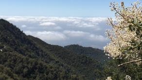 6 Pack Of Peaks Challenge 2016: Mt Wilson