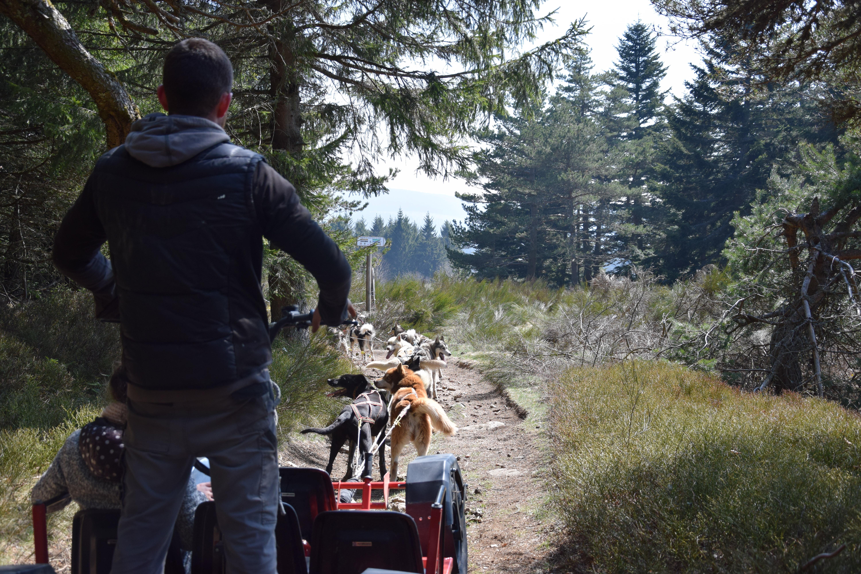 Chien de traineau - Cani-Kart