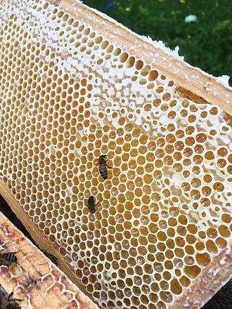 Honung snart klar.jpeg