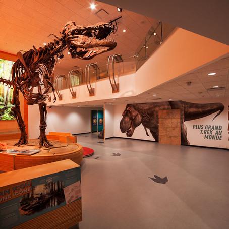 Scotty the T-Rex Installation