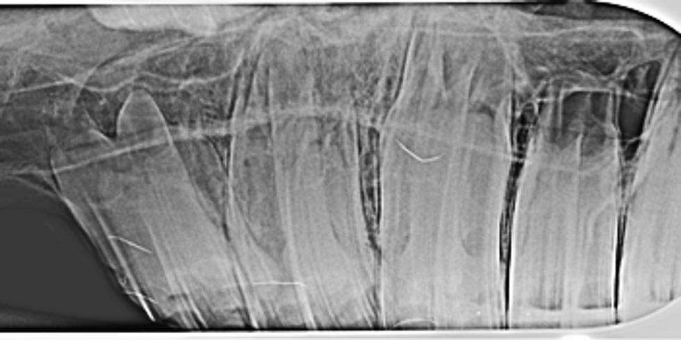 Equine Dental Radiology Course