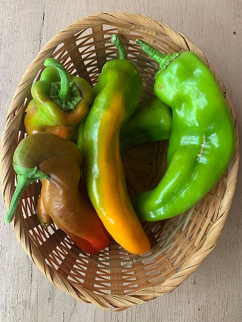 Sweet Pepper.jpg