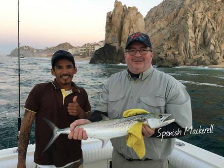 Spanish Mackerell are biting