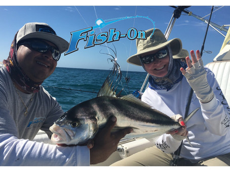 4 Roosterfish #roosterfish #cabosanlucas