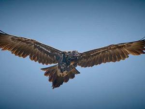 Lockdowns open doors for bird photographer