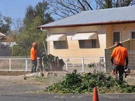 Bourke's fig trees doomed