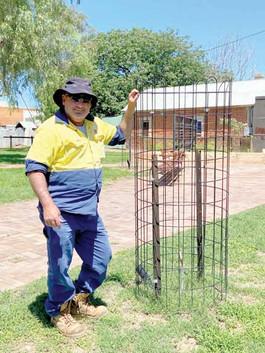 Thieves won't stop tree planting