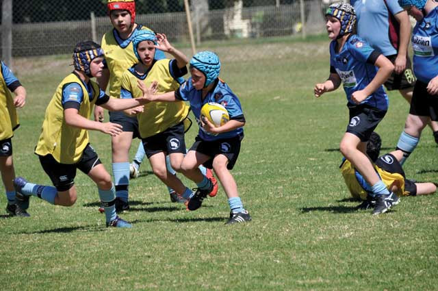 Junior Rugby Report