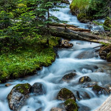 Glacier Creek (Banff N.P.)