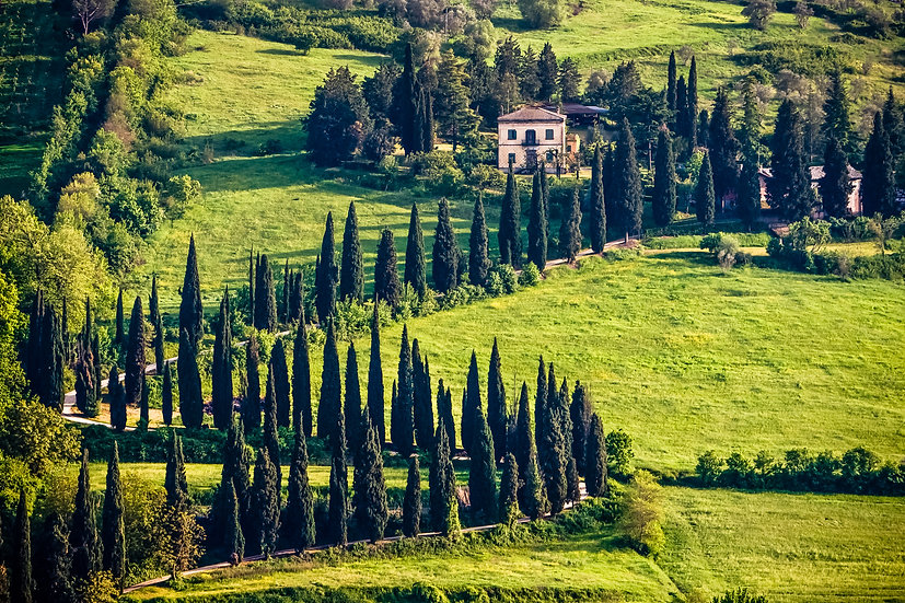Tuscany Villa and Cypress Trees
