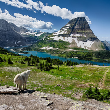 Bearhat and Mountain Goat