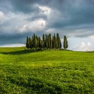 Tuscany Golden Glow (Cypress Grove)