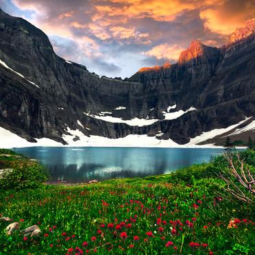 Iceberg Lake Wildflowers